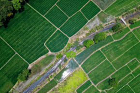 A birds eye view of green agriculture farmland with a river in the middle.